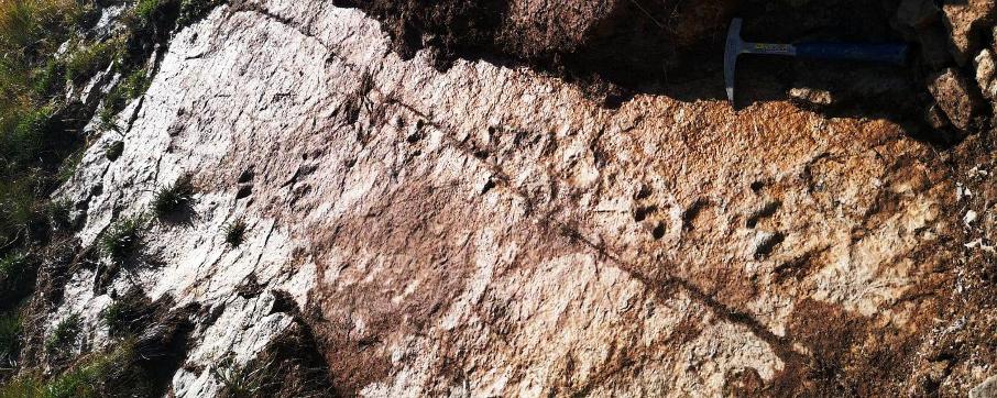 Le orme che hanno consentito la descrizione della nuova icnospecie Isochirotherium gardettensis - Foto di F.M. Petti